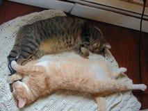 Frère Cats Cuddling One un autre images libres de droits