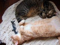 Frère Cats Cuddling One un autre images stock