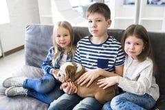 Frère et soeur jouant sur le divan avec le bouledogue de l'anglais de chiots Photo libre de droits