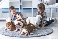 Frère et soeur se trouvant sur le plancher avec des chiots de bouledogue et de jeu anglais Photographie stock