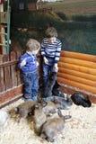 Frères avec des lapins Images libres de droits