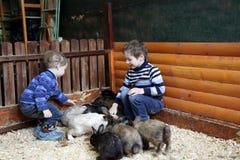 Frères jouant avec des lapins Image stock