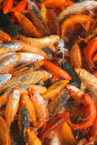 Frénésie alimentante Images libres de droits