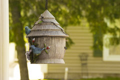 Frénésie de alimentation d'oiseau Images stock