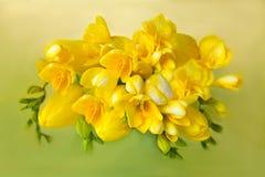 Frésias amarelas das tulipas do ramalhete Imagem de Stock Royalty Free