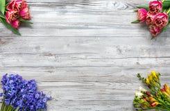 Frésias, tulipas e scillas, flores coloridas para a primavera Imagem de Stock