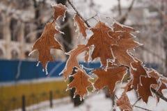 frío Fotografía de archivo libre de regalías