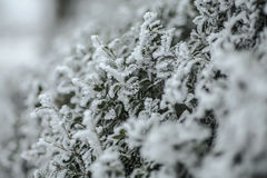 frío Foto de archivo