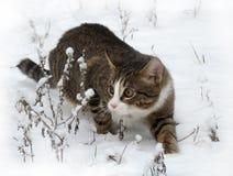 Frío de leon del gato Fotografía de archivo