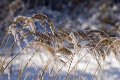Frío y nieve Imagen de archivo libre de regalías