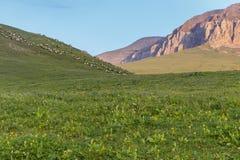 Frôlant des troupeaux des moutons haut dans les montagnes Photographie stock