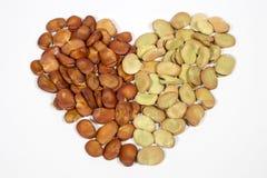 Frö av bondbönan ordnade att bilda formen av hjärta royaltyfria bilder