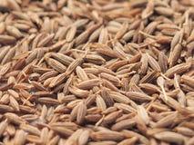 Frö av kryddor för bakgrunder Royaltyfri Fotografi