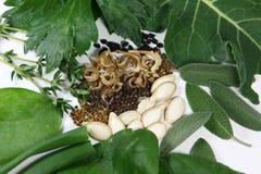 Frö och växter från trädgården Royaltyfria Foton