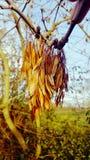 Frö på ett träd fotografering för bildbyråer