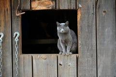 Fröcken Friendly den vresiga ladugårdkatten Royaltyfri Fotografi