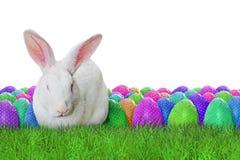 Fröhliche Ostern auf weißem Hintergrund Lizenzfreie Stockbilder