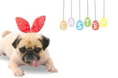 Fröhliche Ostern, Pug, der die Ostern-Kaninchen Häschenohren sitzen nahe bei einem Pastell bunt von den Eiern mit Kopienraum träg lizenzfreies stockbild