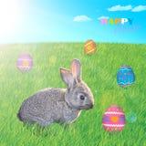 Fröhliche Ostern! Wenig flaumiges Häschen auf dem Gras mit Ostereiern Stockfotos