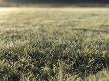 Fröste auf dem Gebiet eines grünen gut-gepflegten Rasens lizenzfreie stockfotos