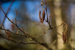 Fröt av trädet Arkivbild