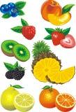 Früchte lizenzfreie abbildung