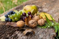 Früchte Stockfotografie