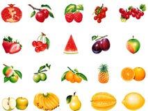 Früchte vektor abbildung