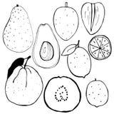Früchte Auch im corel abgehobenen Betrag Stockfoto