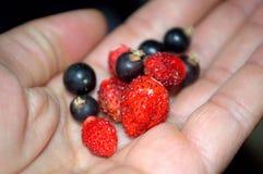 Früchte in der Hand Lizenzfreies Stockbild