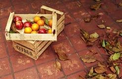 Früchte in der Holzkiste Stockbild