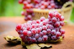 Früchte der roten Traube Stockfoto