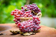 Früchte der roten Traube Lizenzfreie Stockbilder