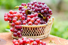 Früchte der roten Traube Lizenzfreies Stockfoto
