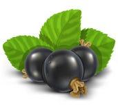 Früchte der Schwarzen Johannisbeere mit grünen Blättern Lizenzfreie Stockfotos