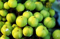 Früchte des Kandelaberbaums, Euphorbiengummi ingens stockfoto