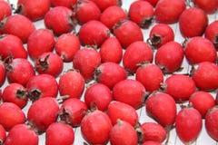 Früchte des Weißdorns Lizenzfreie Stockbilder