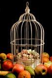 Früchte, die einen Käfig mit den Bonbons beiliegend umgeben lizenzfreie stockfotografie