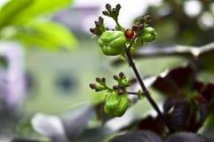Früchte in einem Dschungel lizenzfreies stockbild