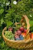 Früchte in einem Korb Stockfoto