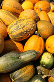 Früchte eines reifen Kürbises Stockbilder