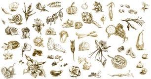 Früchte, Gemüse, Blumen Stockfotos