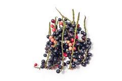 Früchte getrennt auf weißem Hintergrund Lizenzfreie Stockfotografie