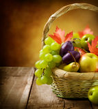 Früchte im Korb Stockbilder