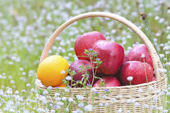 Früchte im Korb Lizenzfreies Stockbild