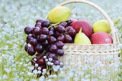 Früchte im Korb Lizenzfreies Stockfoto