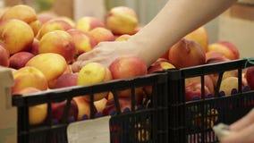 Früchte im Supermarkt stock video