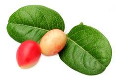 Früchte Koromcha oder Carandas Stockfotografie