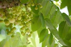 Früchte mit hohem Vitamin- Cinhalt Lizenzfreie Stockfotografie