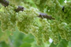 Früchte mit hohem Vitamin- Cinhalt stockfoto